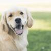 7 friendliest dog breeds