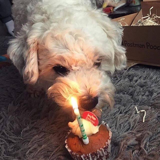 Dog Birthday Cupcake