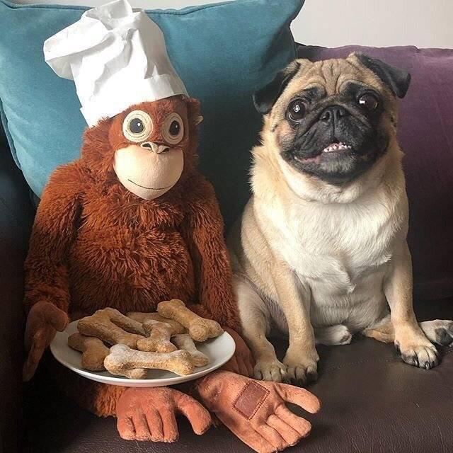 Dog Baking Kit & Recipe