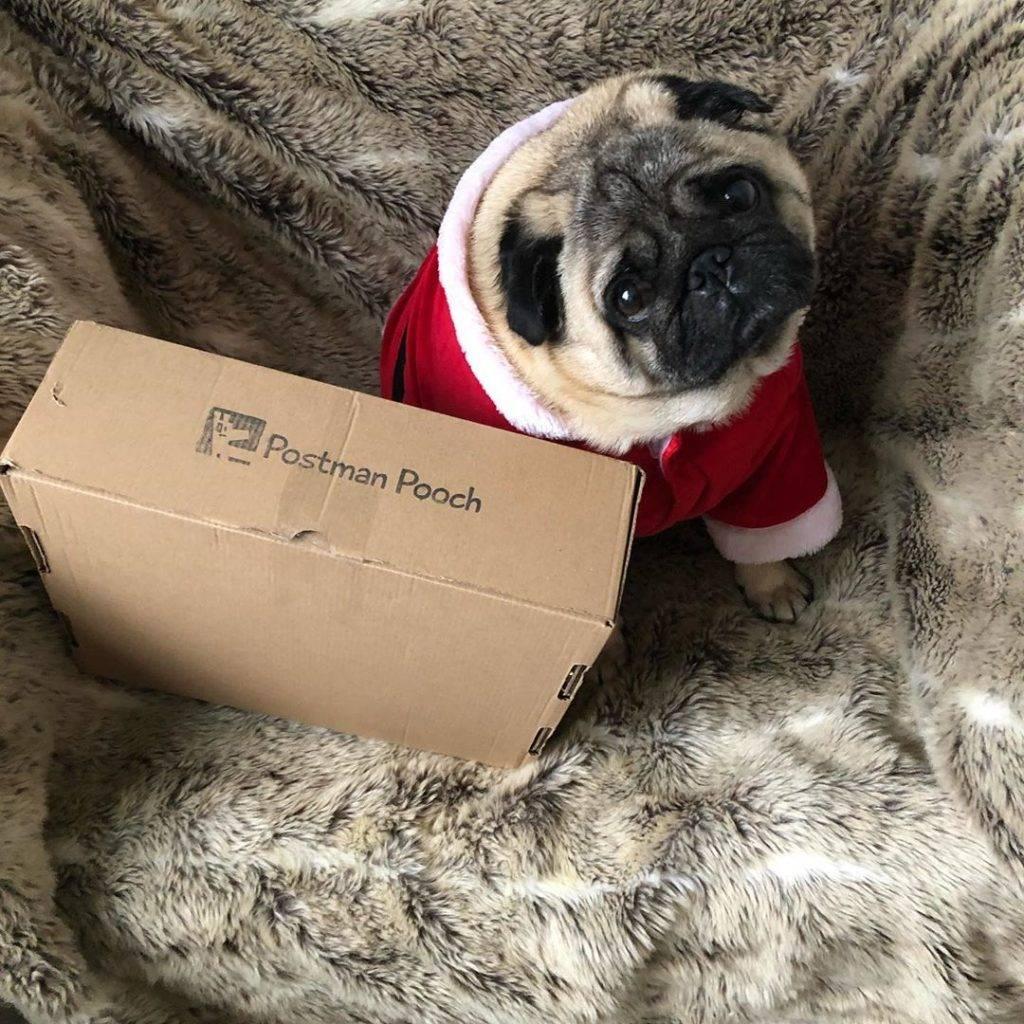 The Christmas Dog Treat Box