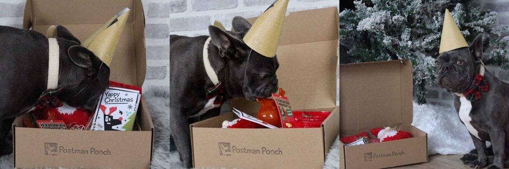 Dog Christmas Boxes