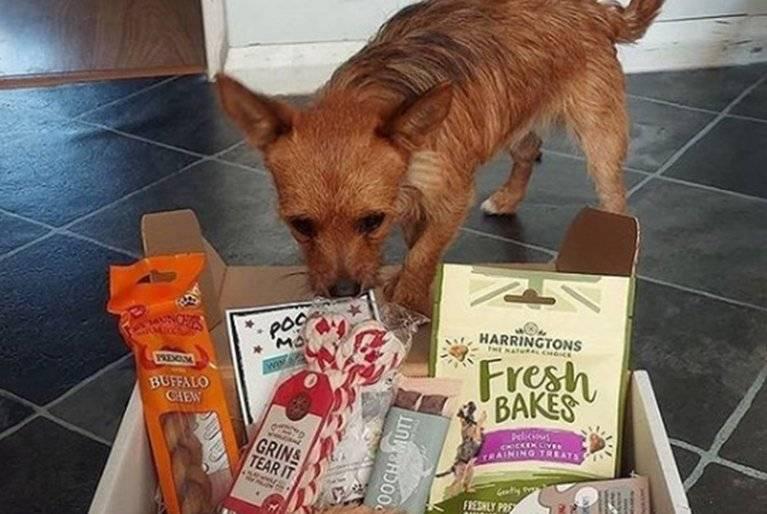 New dog gift box